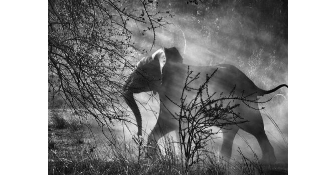 salgado elefante