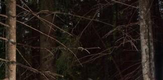 fotografia sommariva per la mostra Baessa 1310 Lagorai Fotografato