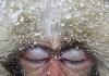 foto scimmia occhi chiusi Wildlife Photographer of the Year 2012