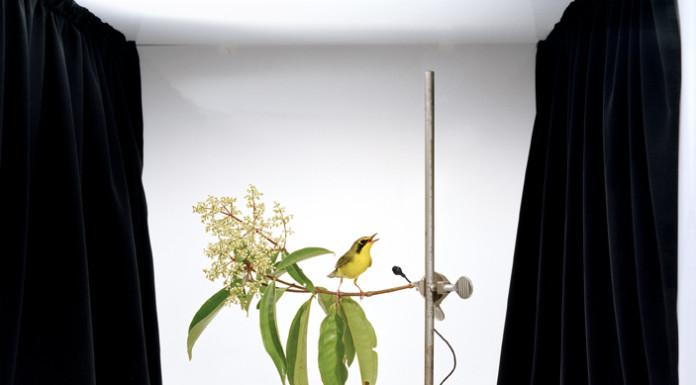 uccello giallo rimini foto settembre