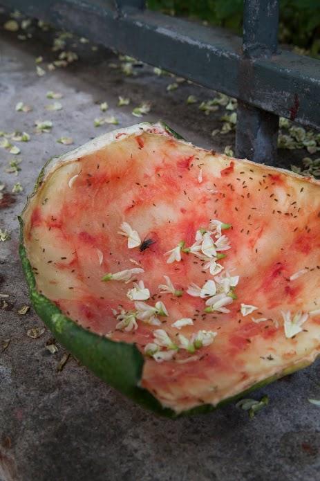 Tim Davis, Watermelon