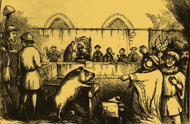 Animali trascinati in tribunale