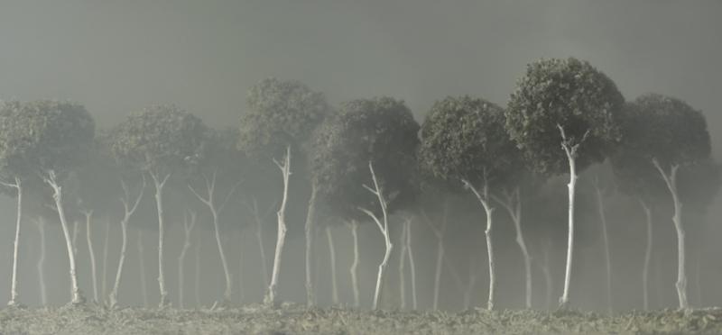 ph Silvia Camporesi, il bosco bianco