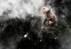 Forte di Bard la mostra Wildlife Photographer of the Year 2013