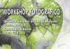 workshop basi fotografia reggio emilia locandina