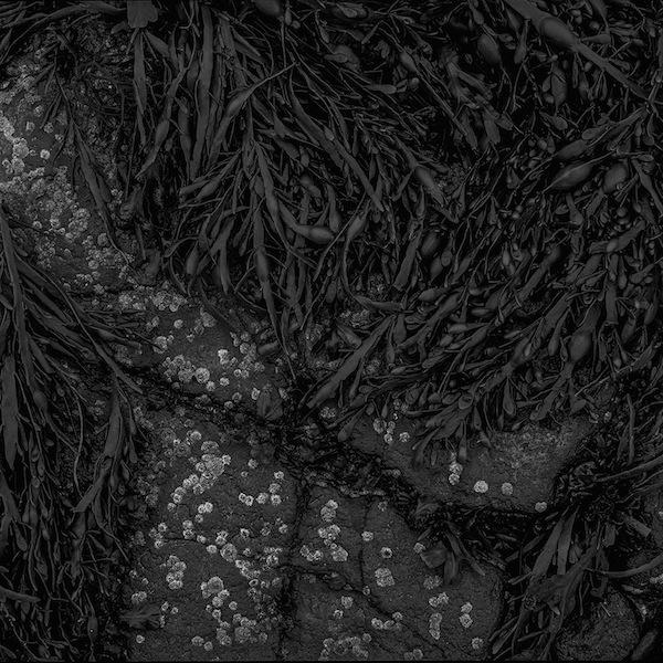 Tiziano Rossano Mainieri Cramond Island, 2014 particolare, stampa ai sali d'argento, 38 x 38 cm
