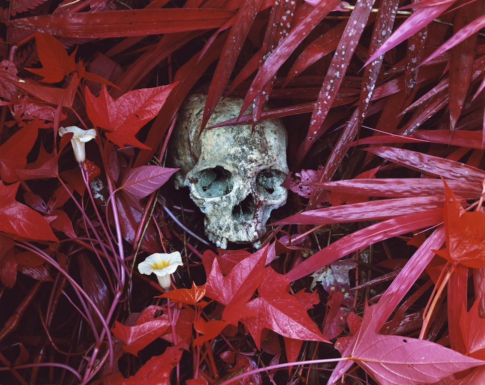 Richard Mosse Of Lilies and Remains, Eastern Congo, 2012 Digital C print, 101.6 x 127 cm © Richard Mosse Courtesy of the artist and Jack Shainman Gallery