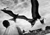 Saudade Moon di Paolo Marchetti mostra a Lucca foto uccelli