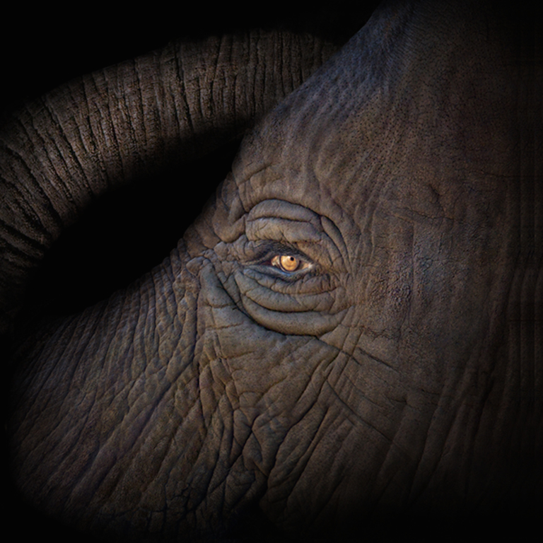 Irene Kung, Elefante, 2007