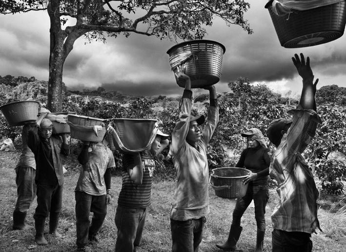 Raccoglitori di caffè. Finca la Hilda sulle pendici del vulcano Poas, regione San José, Costa Rica 2013. © Sebastião Salgado/Amazonas Images