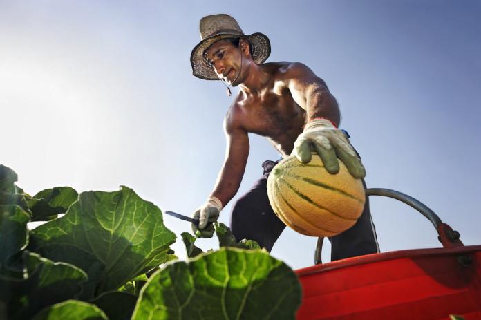 contest fotografico obiettivo agricoltura 2015