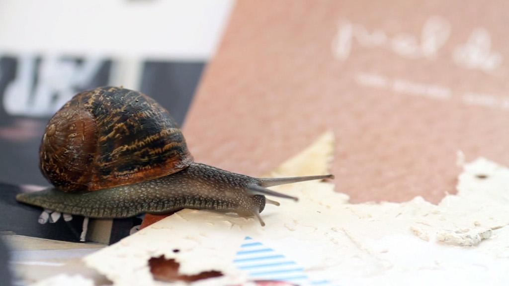 Joan Fontcuberta, Gastropoda © Joan Fontcuberta