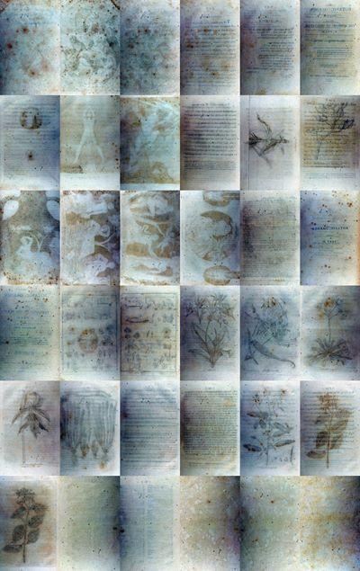 Ákos Czigány, 36 blank pages from Erasmus Darwin: The Botanic Garden. A Poem in Two Parts. London: J. Johnson, St. Paul's Church-Yard. 3rd edition. 1795, 2010. courtesy Nopx, Torino