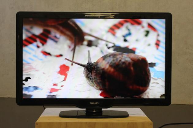 Ultimo week end di Fotografia Europea 2015 reggio emilia