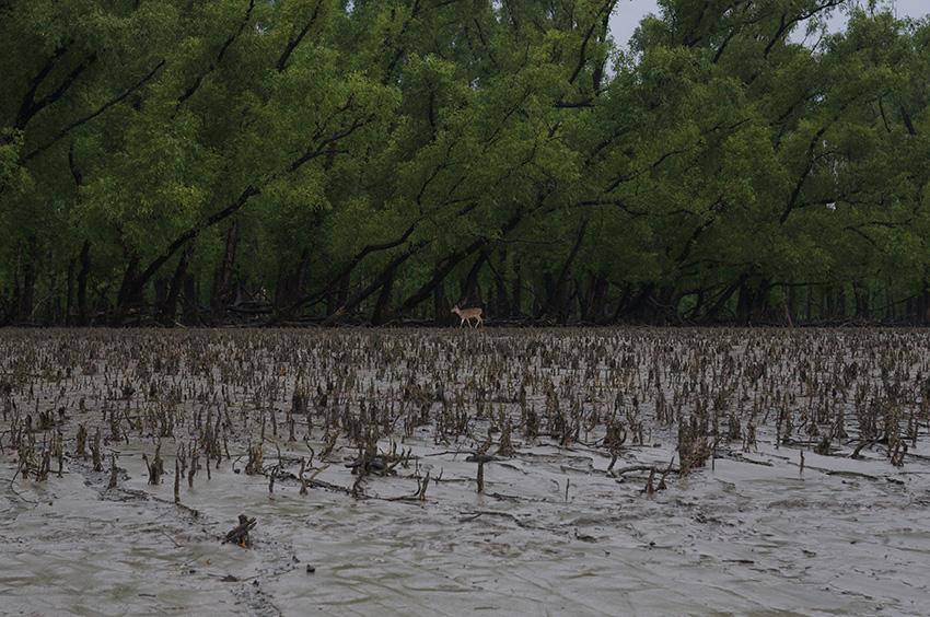from the series, Rivers become Oceans Lone Deer, Sundarbans, Bangladesh, 2008 © Tomoko Yoneda
