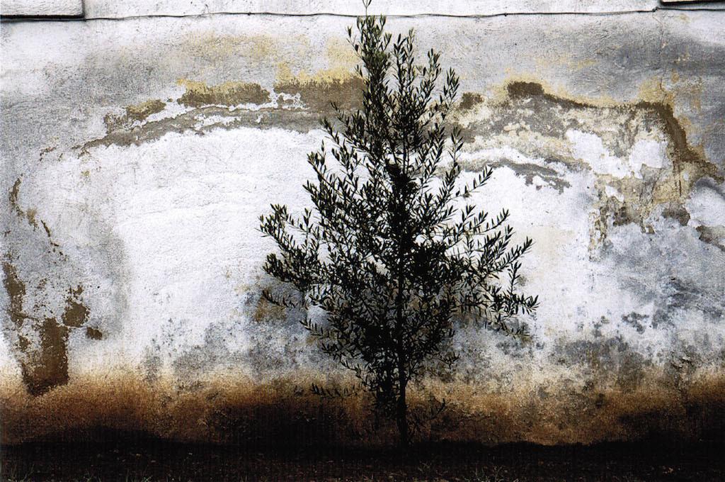 ©Abbas Kiarostami The wall 3, 2010 Stampa a getto di inchiostro su carta Fine Art Epson Edizione 3 di 5 Cm 57.0x89.0