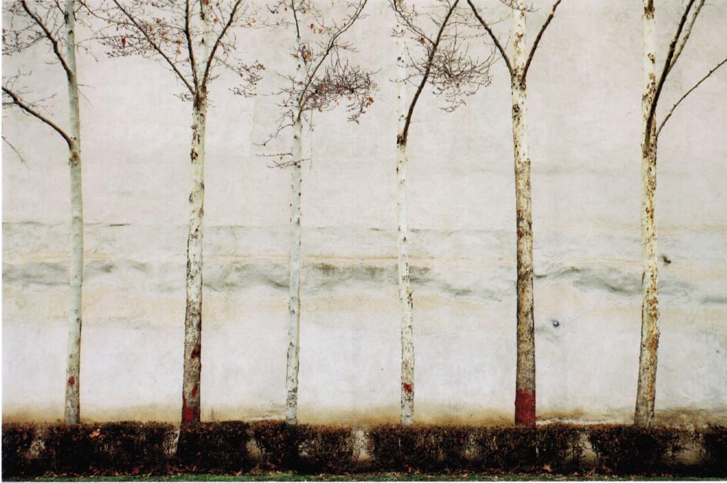 ©Abbas Kiarostami The wall 4, 2010 Stampa a getto di inchiostro su carta Fine Art Epson Edizione 4 di 5 Cm 57.0x89.0