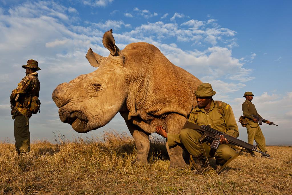 Brent Stirton / Reportage di Getty Images
