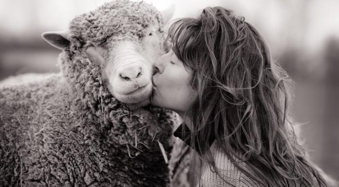 we animals intervista a Jo-Anne McArthur