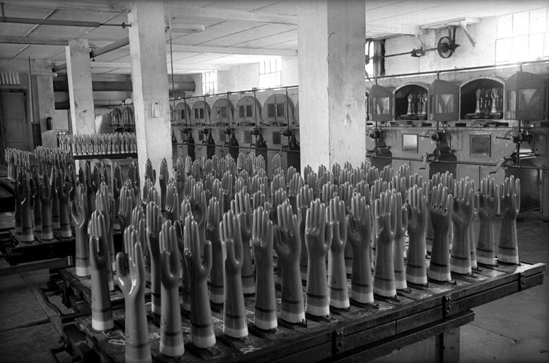 Produzione di guanti in lattice nello stabilimento Hatù, Casalecchio di Reno, 1960 ca. Archivi Alinari-archivio Villani, Firenze