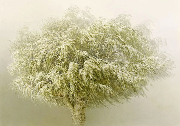 Irene Kung in mostra a Milano con Trees