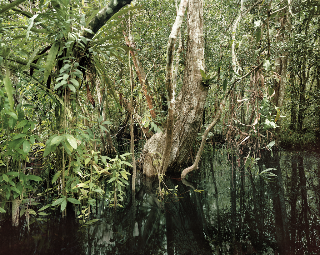 Olaf Otto Becker Primary Swamp from the series Reading the Landscape Courtesy the artist