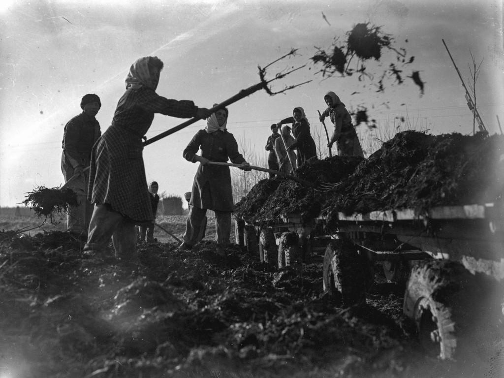 Operaie agricole al lavoro nella concimazione dei terreni@Agenzia Fotografica Internazionale San Marco SAE_1948