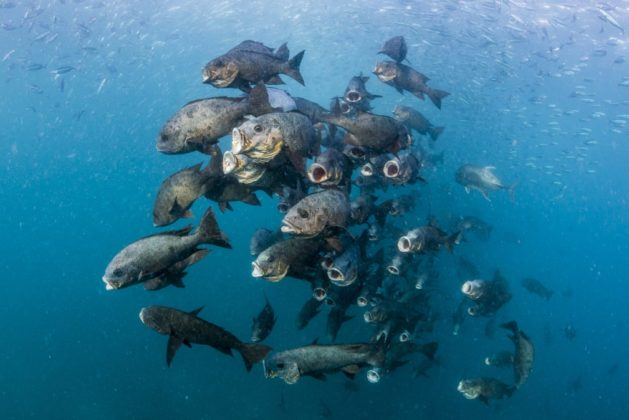 © Noel Guevara, The Philippines, entry, Open competition, Wildlife, 2017 Sony World Photography Awards