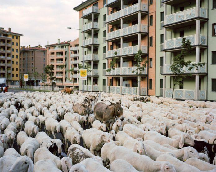 il libro di Stefano Carnelli sui pastori lombardi si presenta a Milano