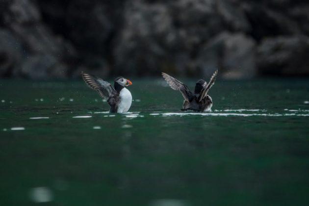 Come fotografare gli animali suggerimenti dei fotografi naturalisti