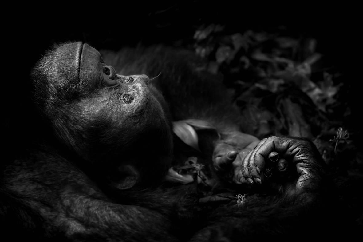 Contemplation © Peter Delaney - Wildlife Photographer of the Year