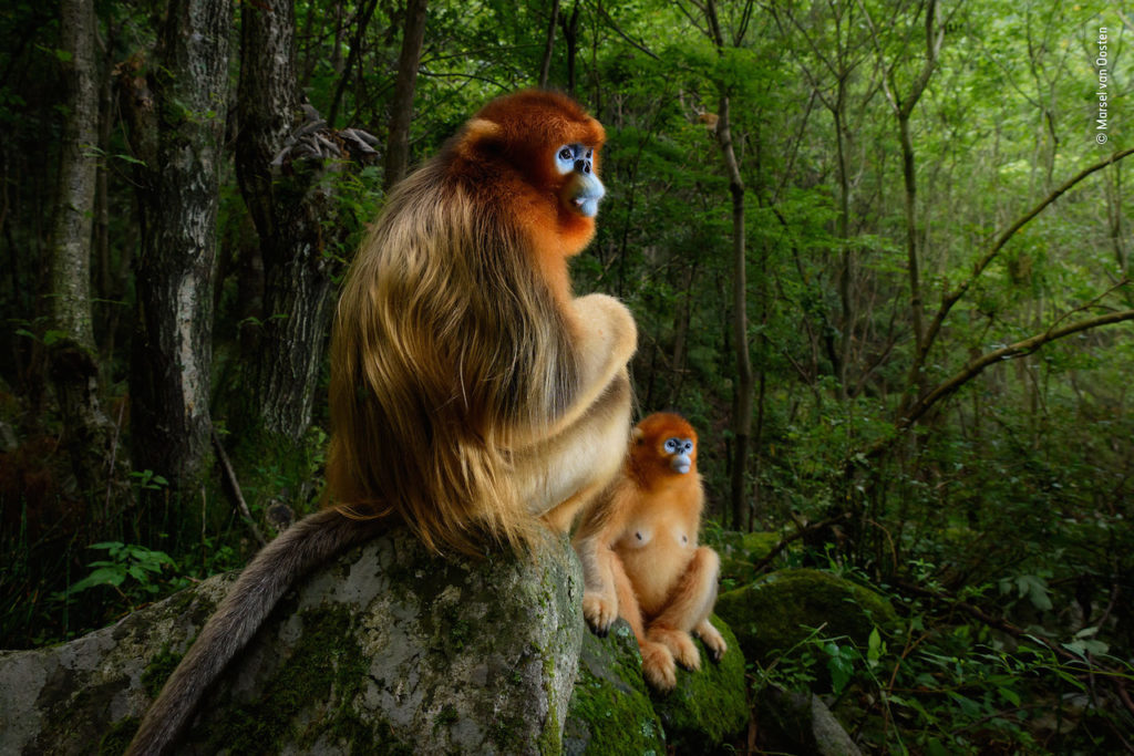 Wildlife Photographer of the Year forte di bard