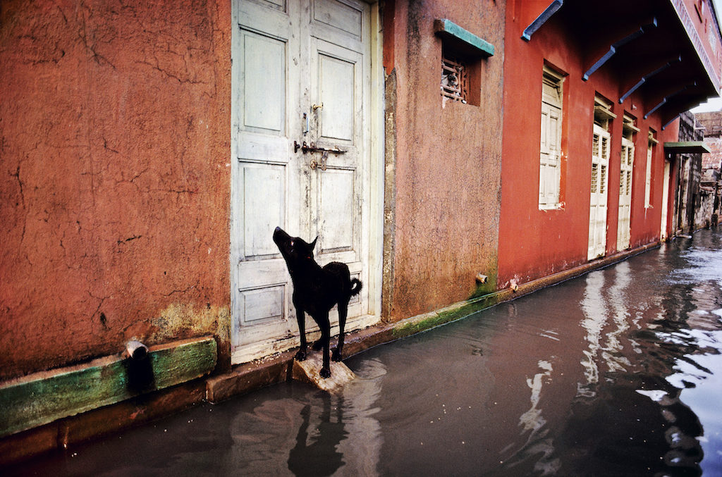steve mccurry animali milano