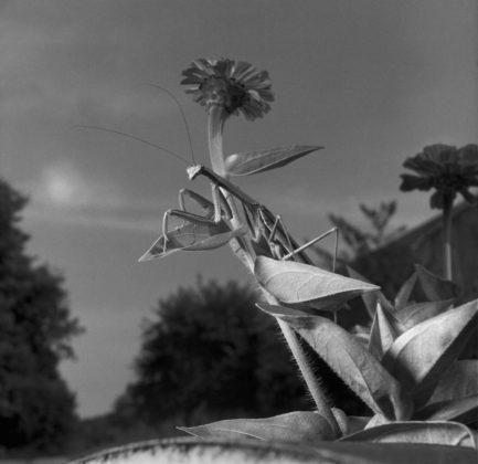 Larry Fink mostra torino Mantis