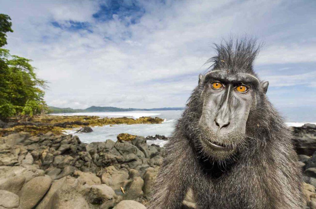 Stefano Unterthiner mostra forte di bard macaco primo piano