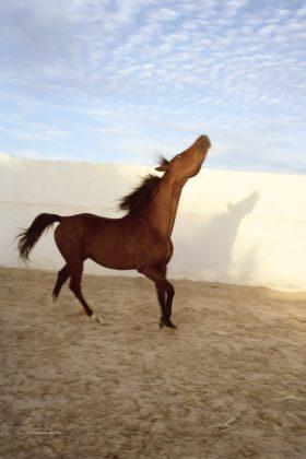 Jitka Hanzlova horse fotografia europea 2020