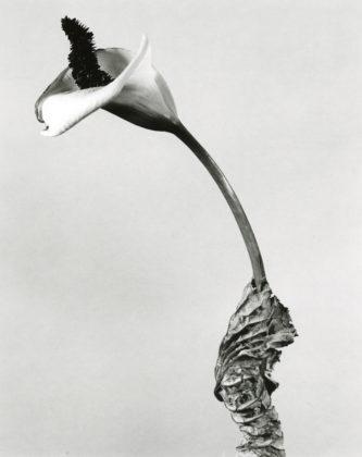 fontcuberta herbarium cala fotografia europea 2020
