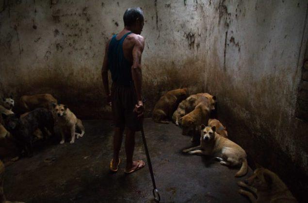 Jo-Anne McArthur Hidden Animals in the Anthropocene