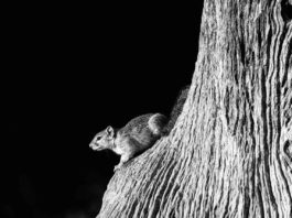 fotografia naturalistica giornata ambiente 5 giugno