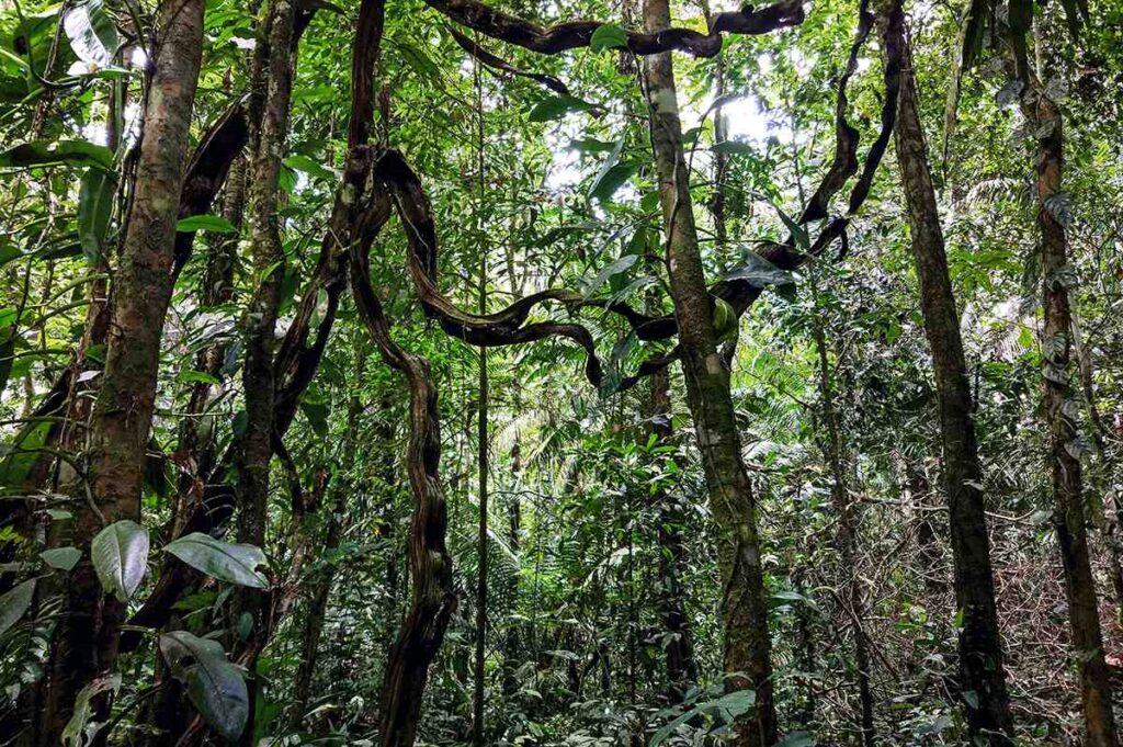 Human forest fotografie Marina Tana Amazzonia