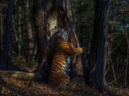 Wildlife Photographer of the year 2020 winner