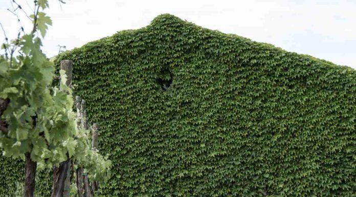 Assisi residenza fotografica progetto A:R