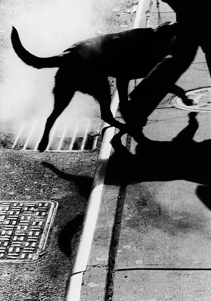 Metropolis Renato DAgostin mostra reggio emilia New York