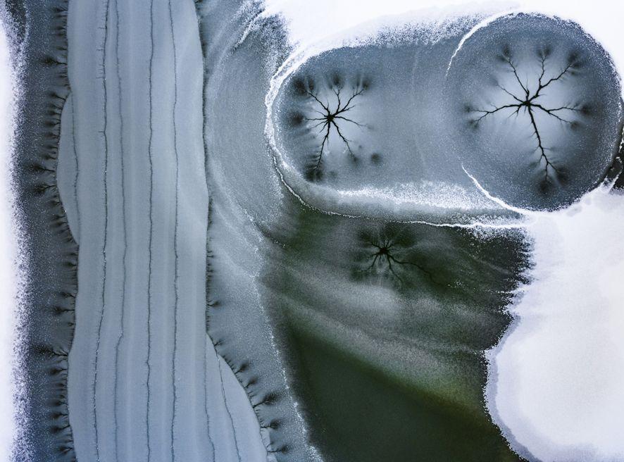 Selvatica mostra virtuale Stelle nel ghiaccio