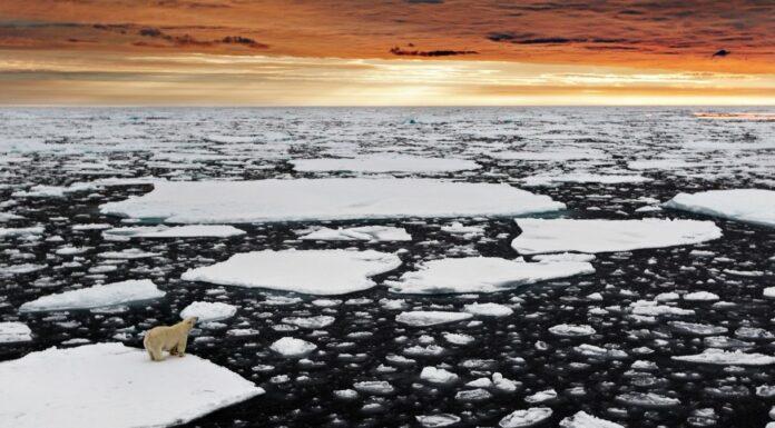 Selvatica mostra virtuale orso polare artico