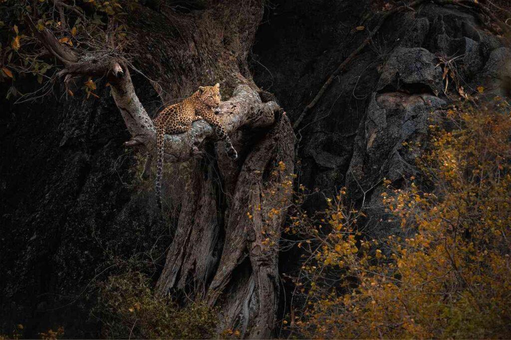 Selvatica mostra virtuale tigre