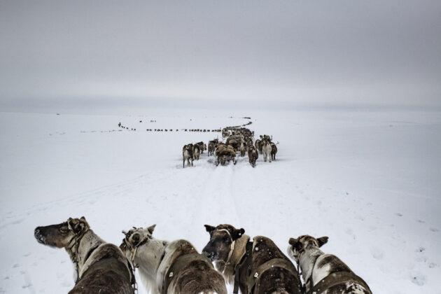 Arctic New Frontier pangea festival