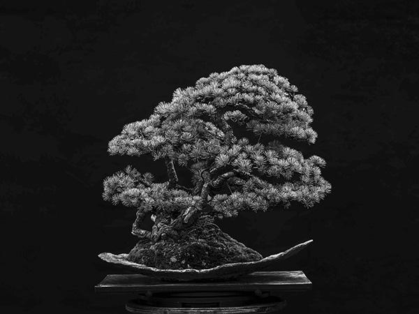 the phair 2021 pellegrin bonsai