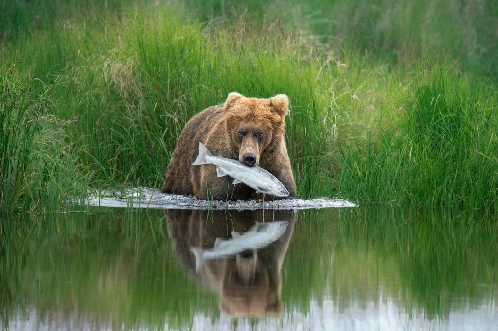 Hannah Vijayan Wildlife Photographer of the Year 2020