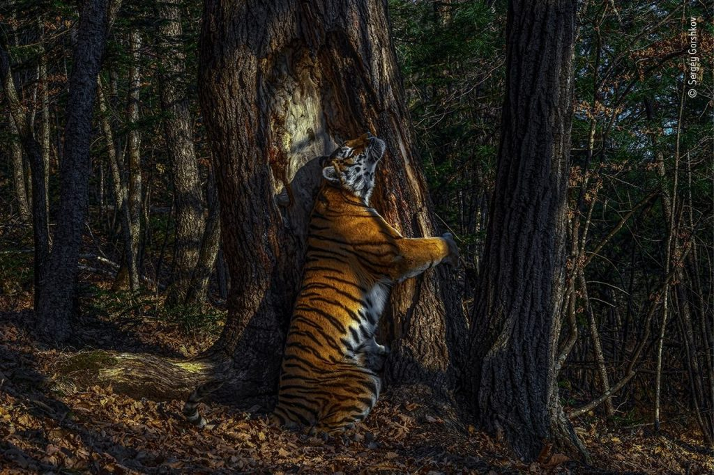 Sergey Gorshkov Wildlife Photographer of the Year 2020